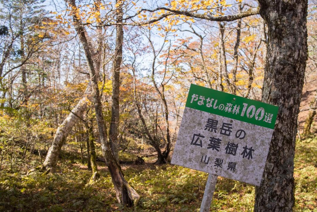 黒岳のやまなしの森林100選