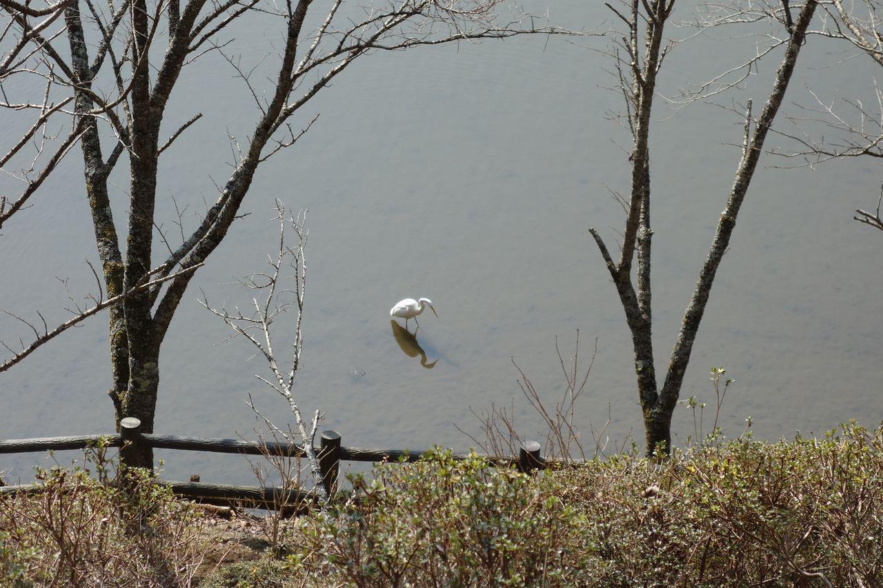 最明寺史跡公園の池