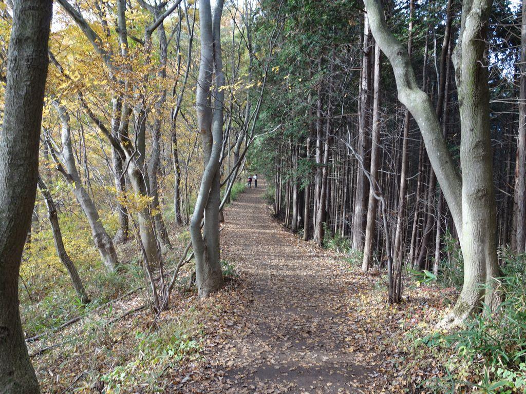 陣馬山付近の縦走路