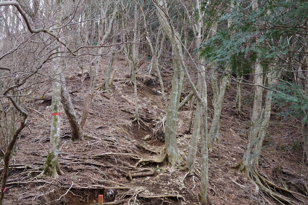 鍋割山 後沢乗越から栗ノ木洞への登り