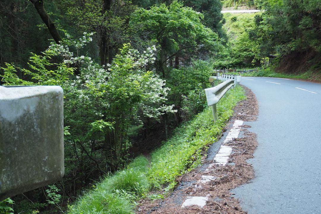 国道299号から坂本への近道