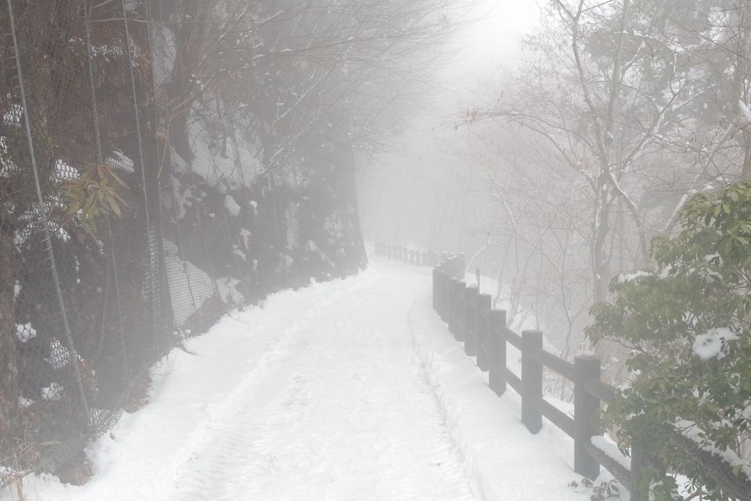 積雪時の都民の森