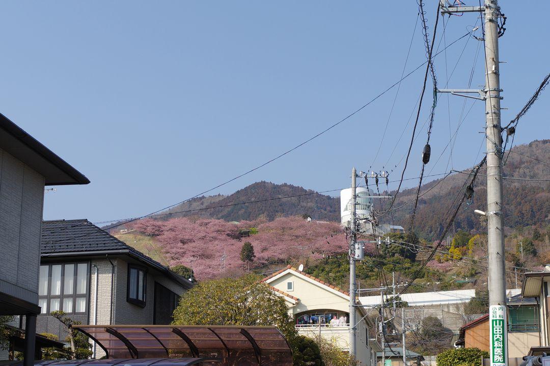 松田市街から見た松田山ハーブ園