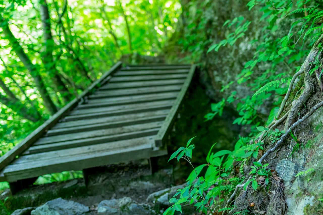 川苔山 川乗橋コースの傾斜した木橋