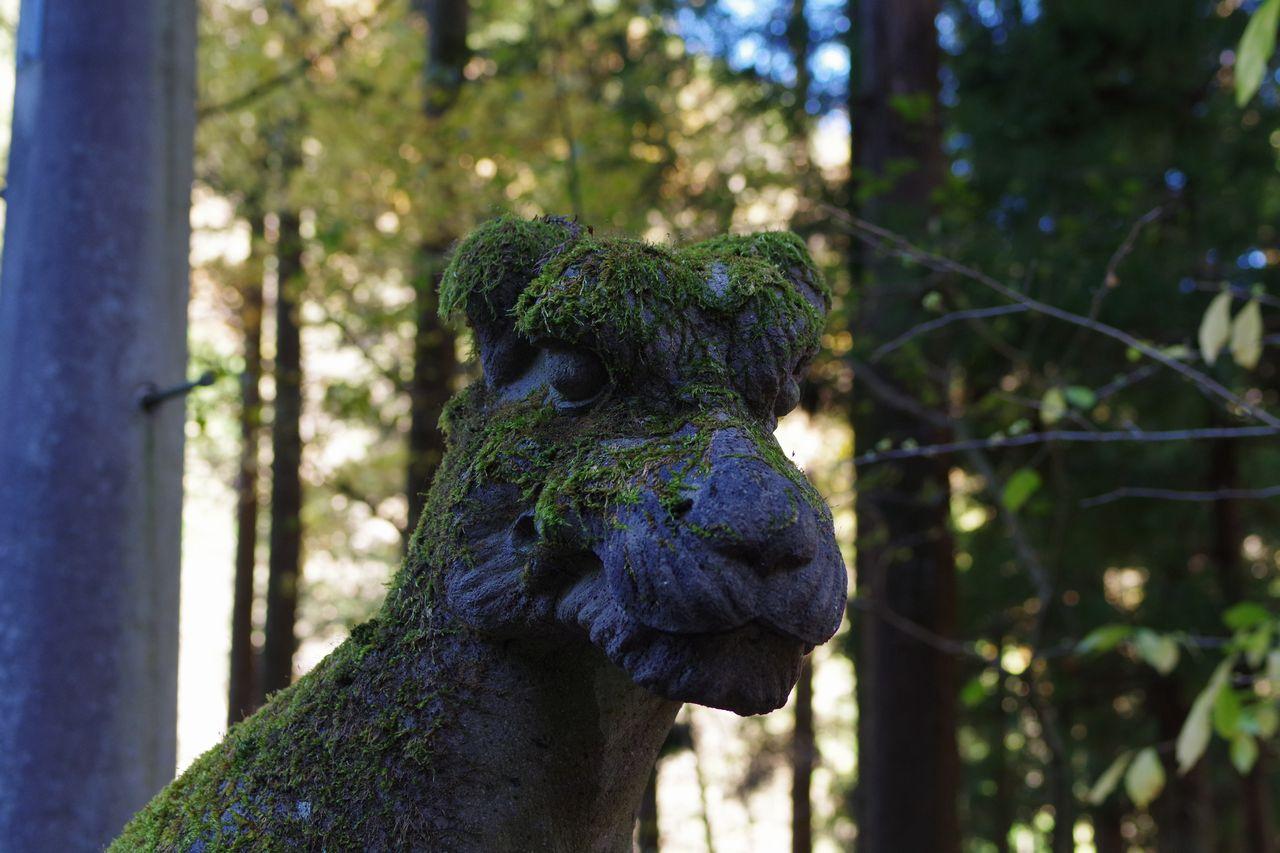 武甲山 一の鳥居の狛犬
