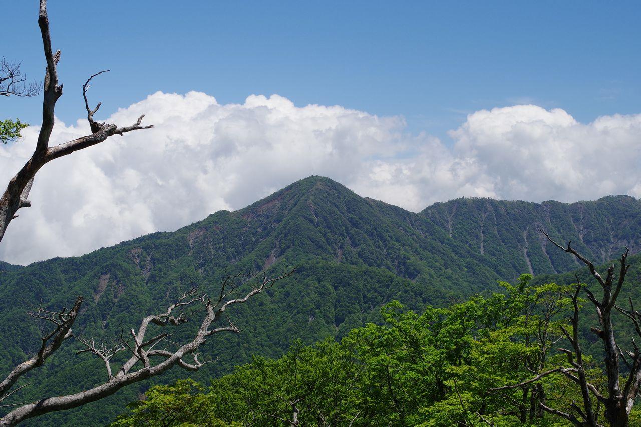 檜洞丸から見た蛭ヶ岳
