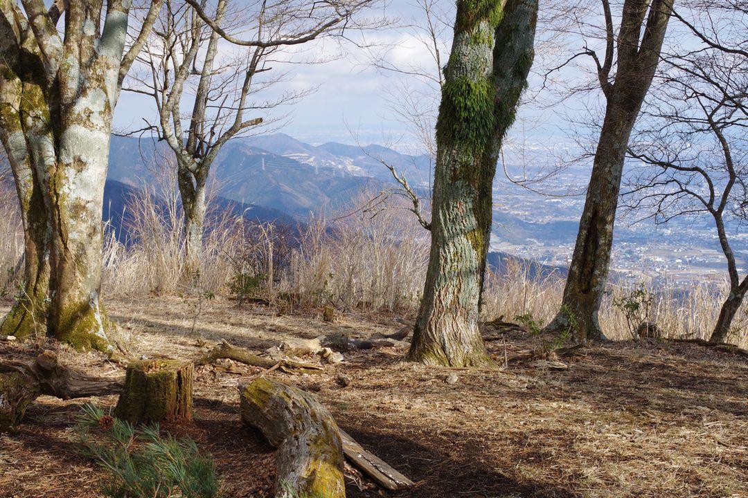 櫟山 山頂の様子