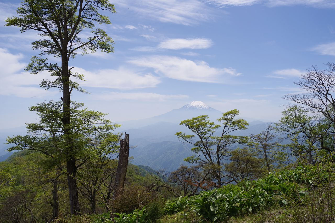 檜洞丸から見た富士山