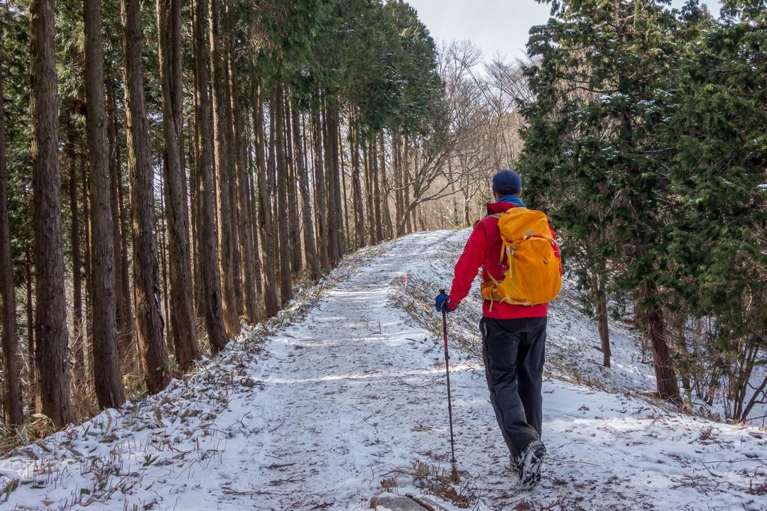 薄く冠雪した高尾陣馬縦走路