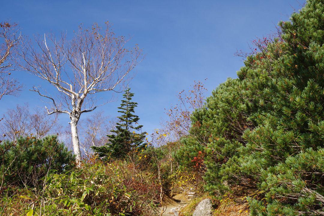 合戦尾根の森林限界越え地点
