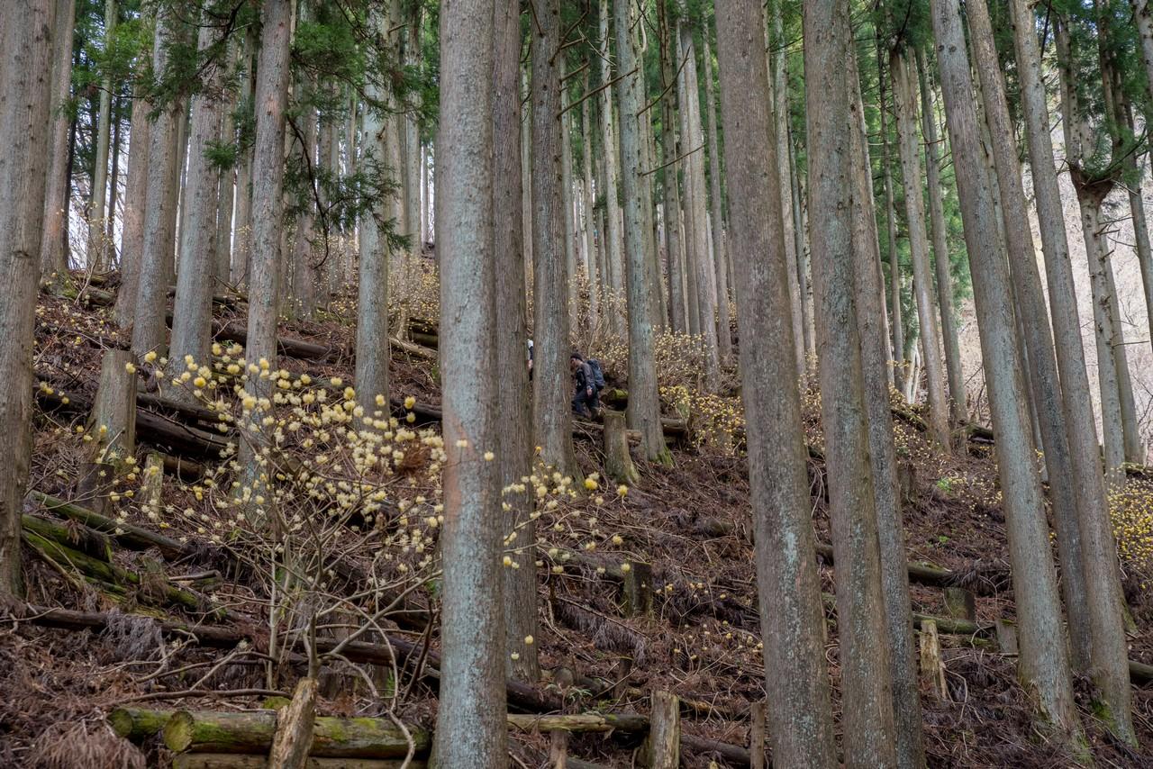 190331ミツバ岳_022
