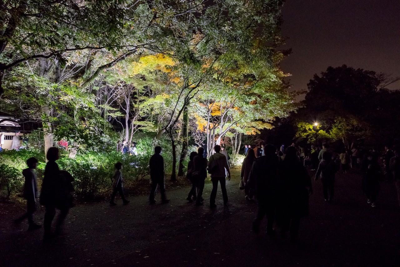 191124昭和記念公園_027