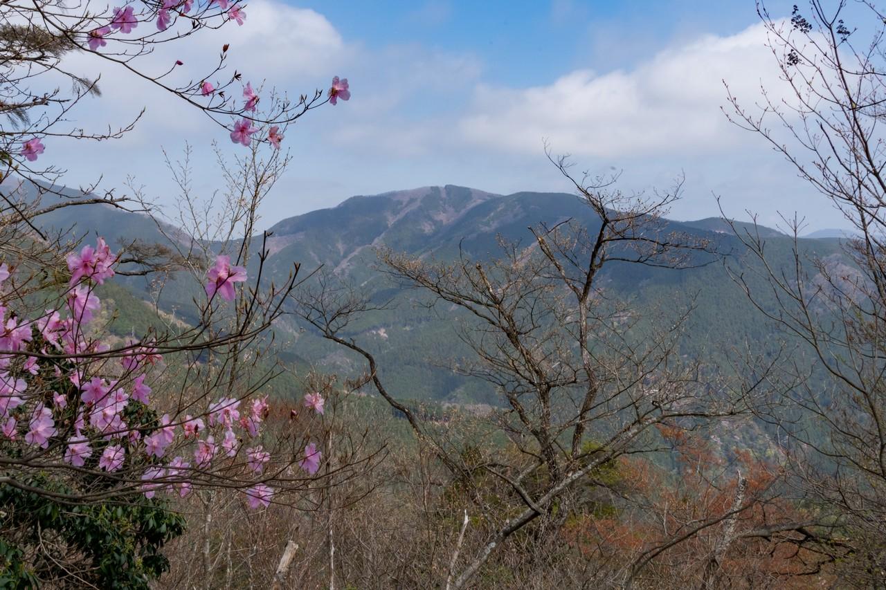 蕨山から見た武川岳