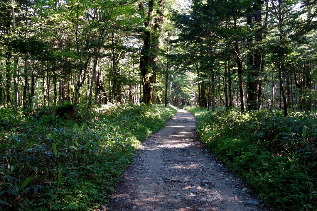 徳沢から横尾への道