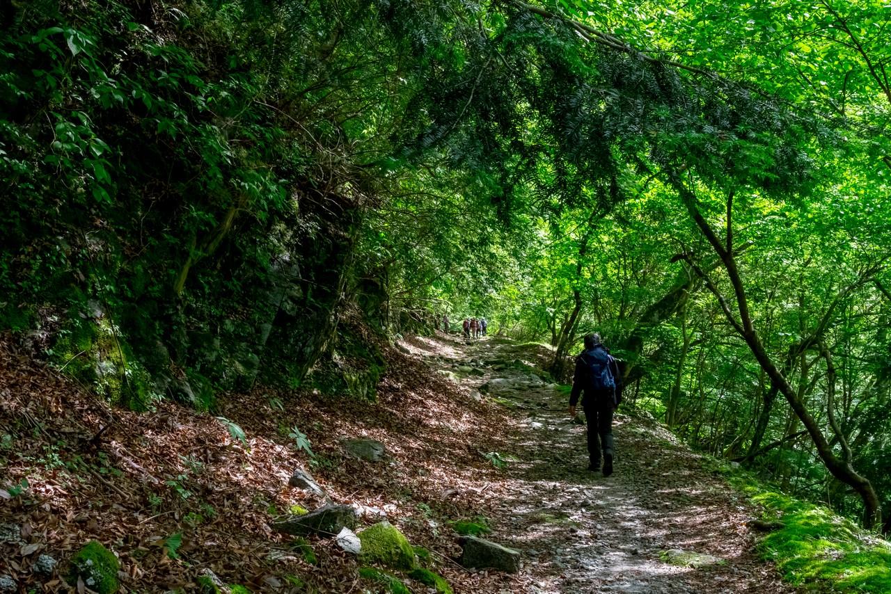 用木沢出合の登山道